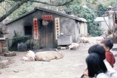 China Coast150