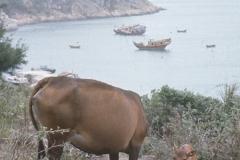 China Coast339