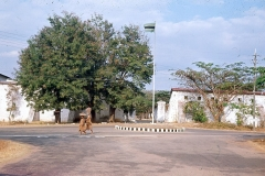 Safari003