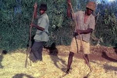 East Africa172