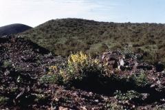 East Africa309