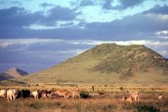 East Africa234
