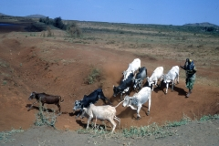 East Africa240 copy