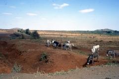 East Africa243 copy