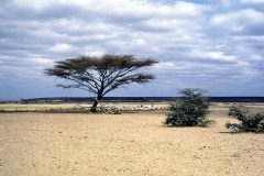 East Africa230