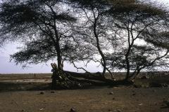 East Africa323