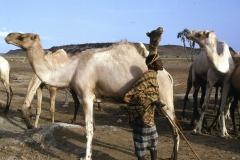 East Africa115