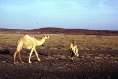 East Africa198