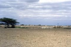 East Africa241