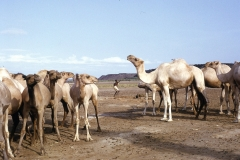 East Africa272