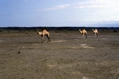 East Africa273