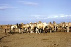 East Africa285