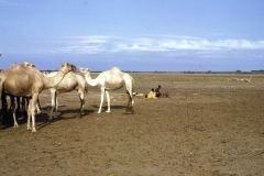 East Africa327