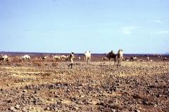 East Africa457