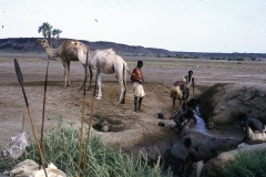 East Africa117